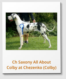 Ch Saxony All About Colby at Chezenko (Colby)